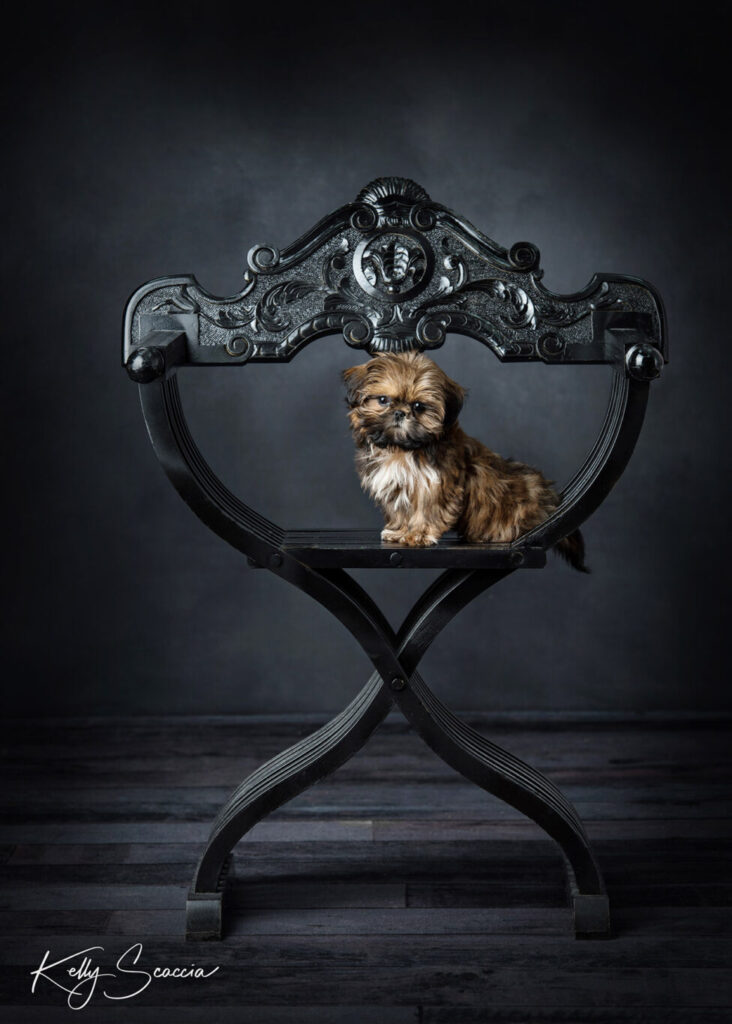 Small brown and black puppy sitting on a black chair looking at you with head tilted